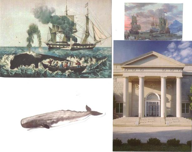 Whales in new london
